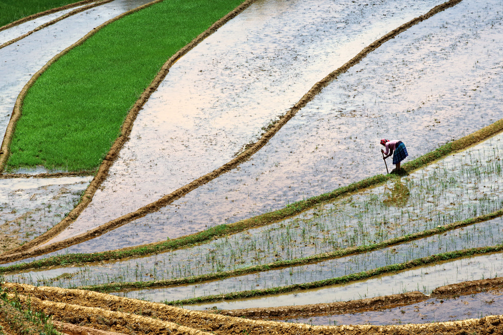 Photograph MuCangChai by Viet Hung on 500px