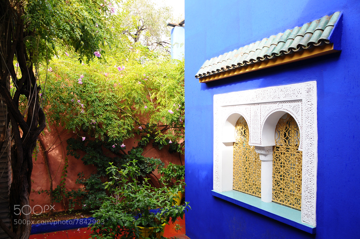 Photograph Jardins Majorelle by Imad Ammor on 500px