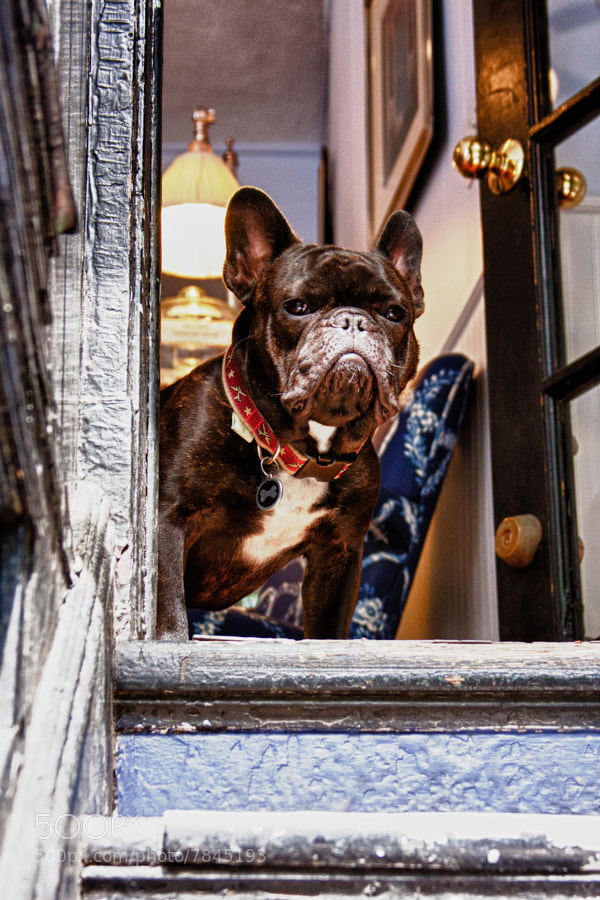 Four Preppy Paws, Beacon Hill, Boston, MA
