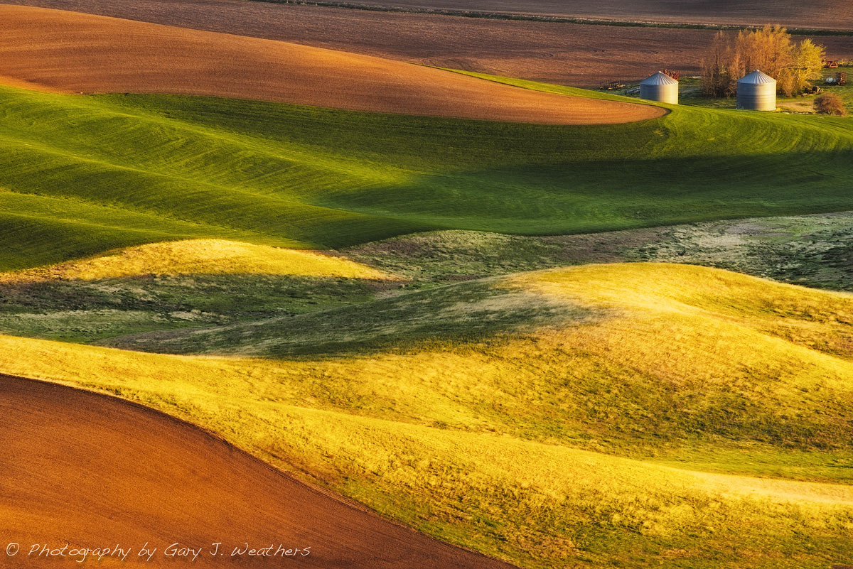 Photograph Green and Gold by Gary Weathers on 500px