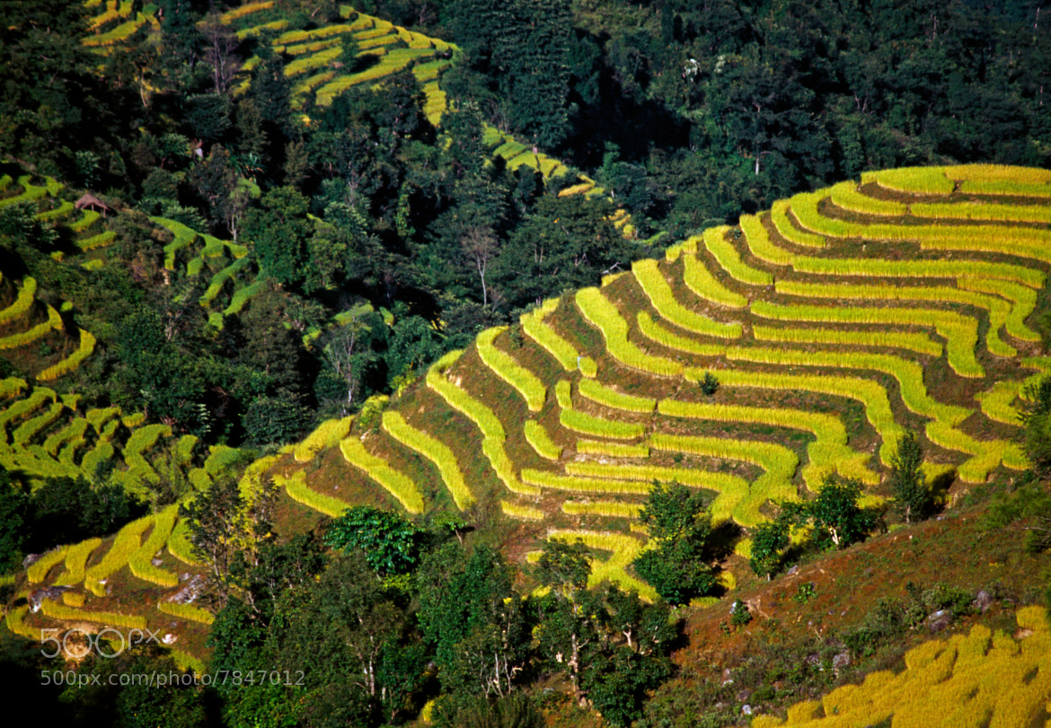 Photograph Verdant terraces by Trevor Cole on 500px
