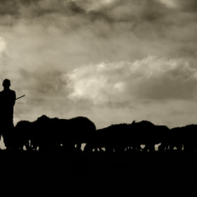 Flock of sheep by yousef khoram (yousef_khoram)) on 500px.com