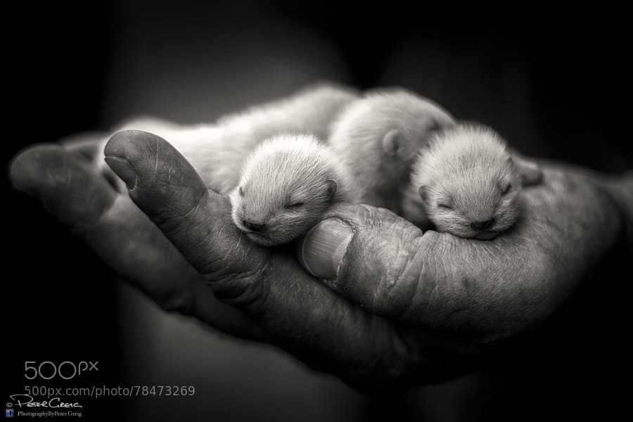 Photograph A Fistful of Kits by Peter Greig on 500px