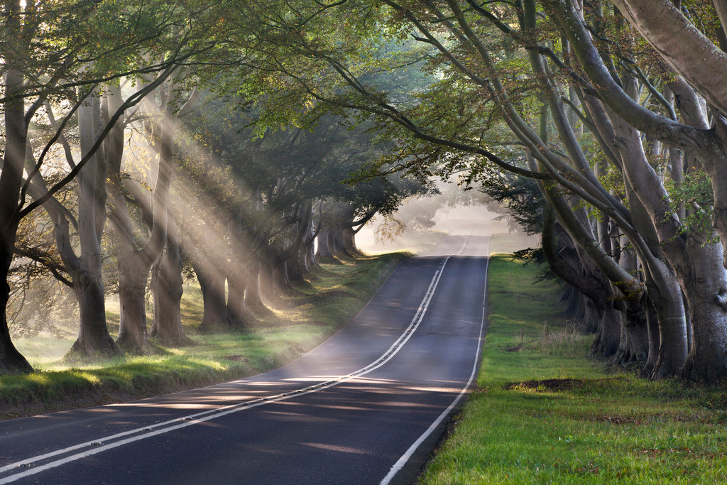 Photograph Beech Avenue, Kingston Lacy, Dorset by Simon Byrne on 500px