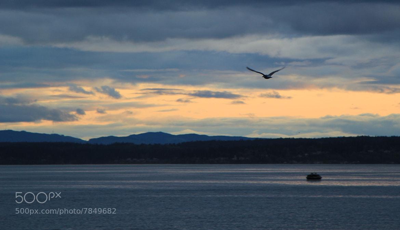 Photograph flying to sunset by Tolga Kilicli on 500px