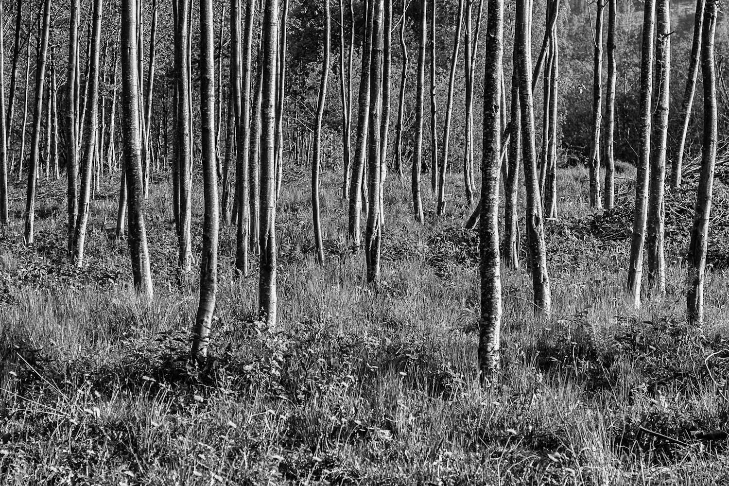 Photograph Trees by Jens-Chr. Strandos on 500px