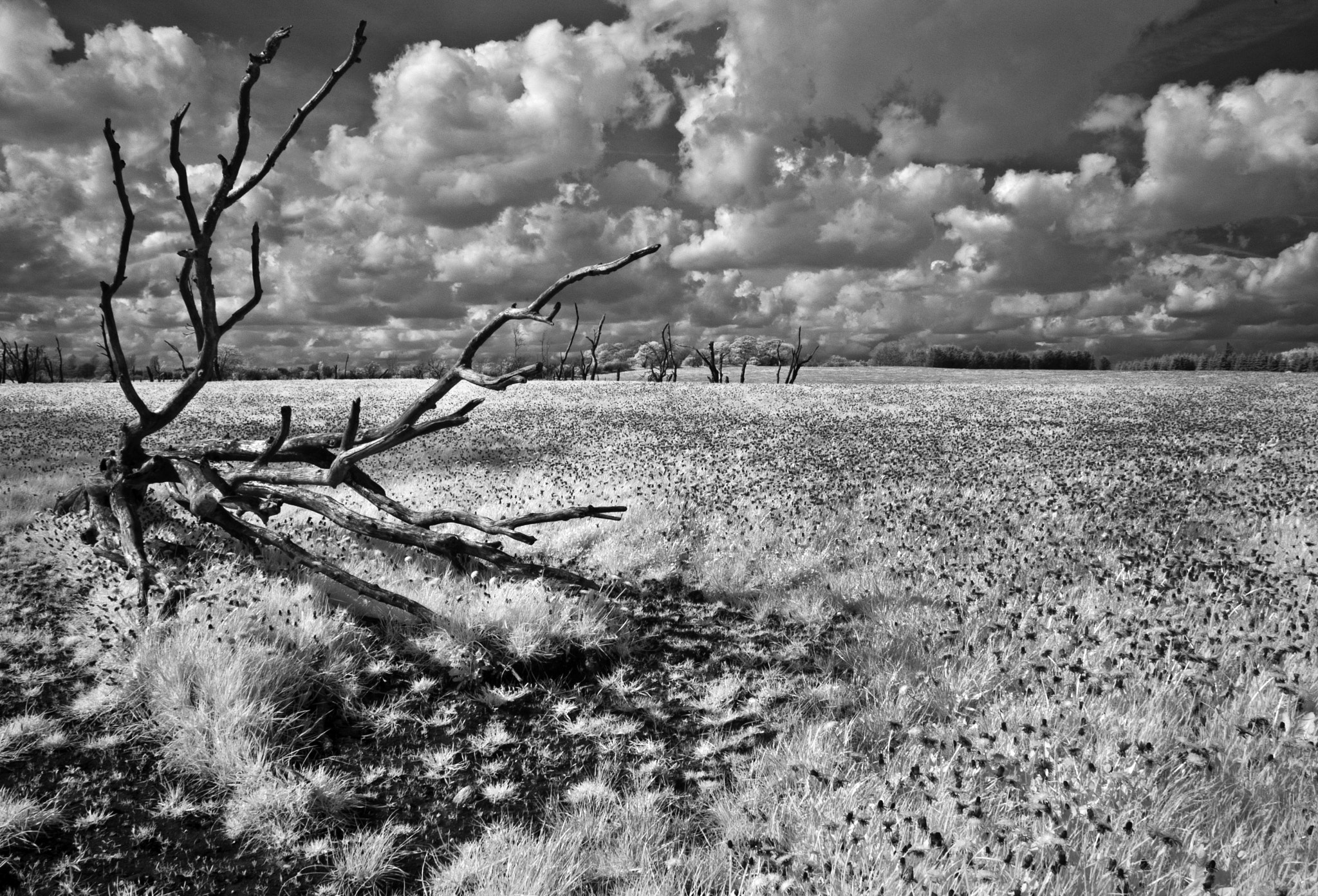 Photograph The spring field by Daniel Hoffmann on 500px
