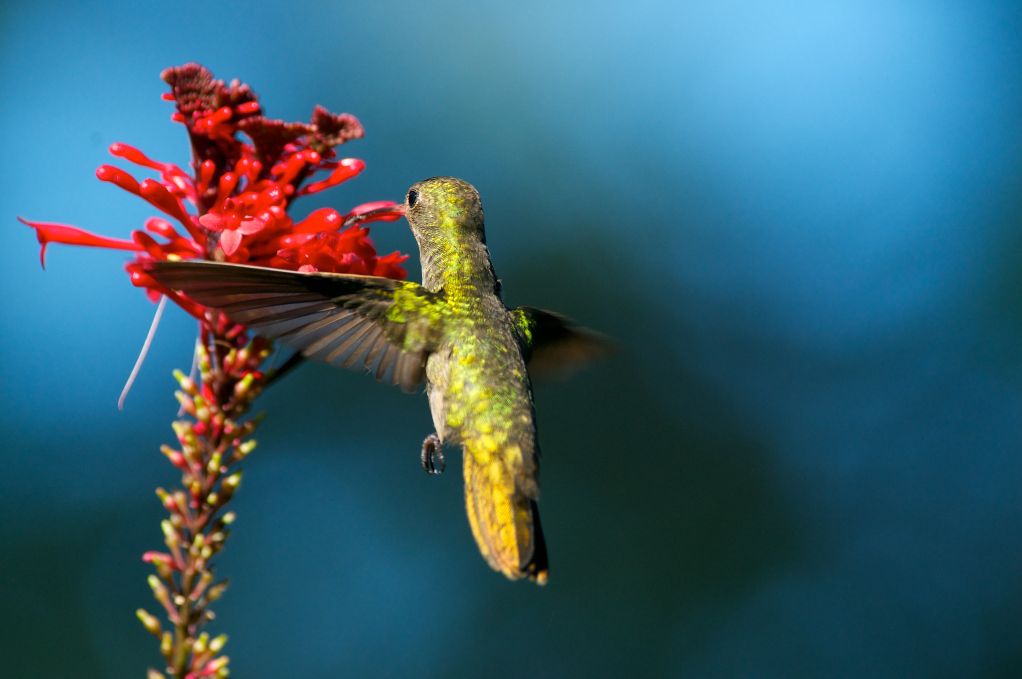 Photograph Colibri by Trevor Cole on 500px