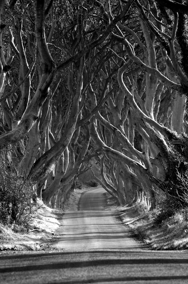 Photograph The dark hedges by Trevor Cole on 500px