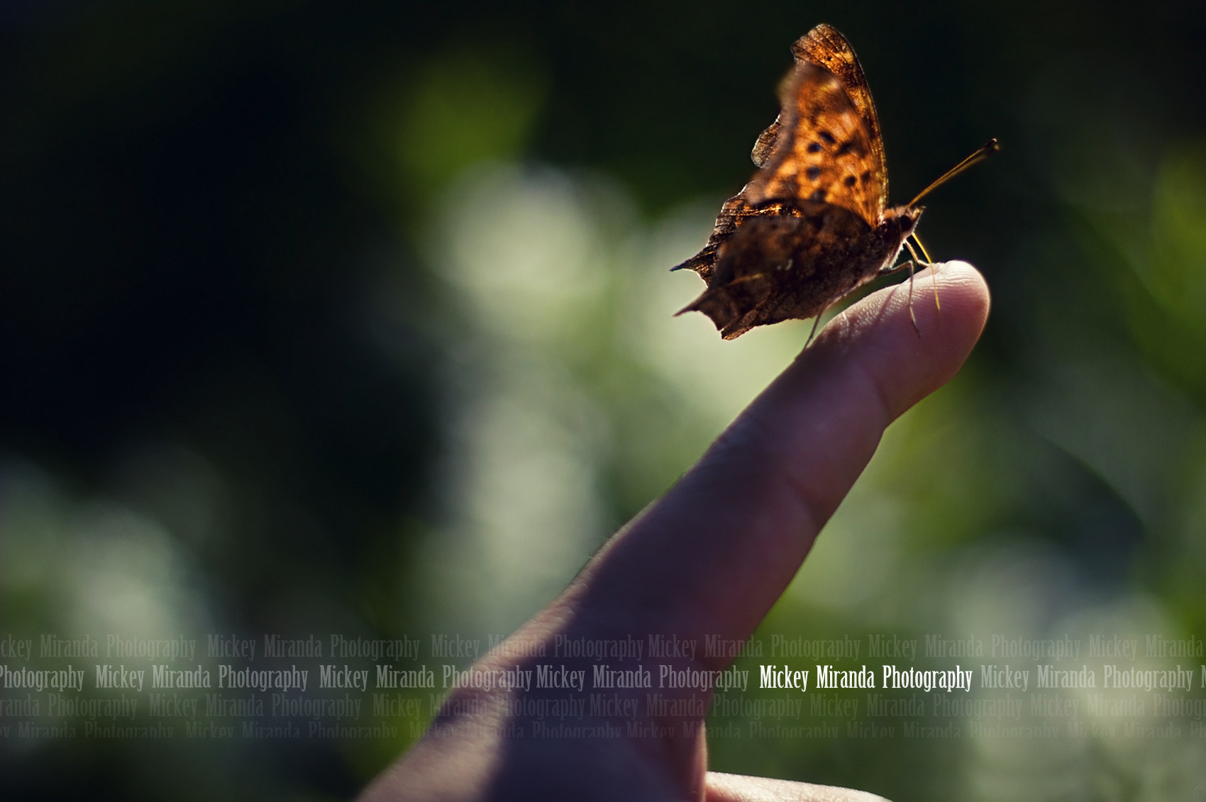 Photograph butterfly by Mickey Miranda on 500px