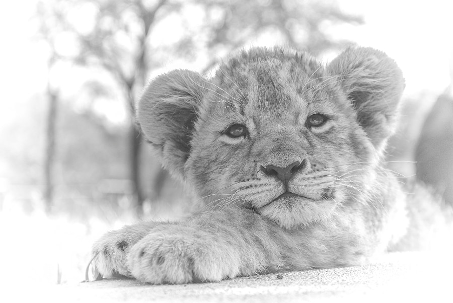 Photograph Happy Cub:D by Tyler Shoemaker on 500px