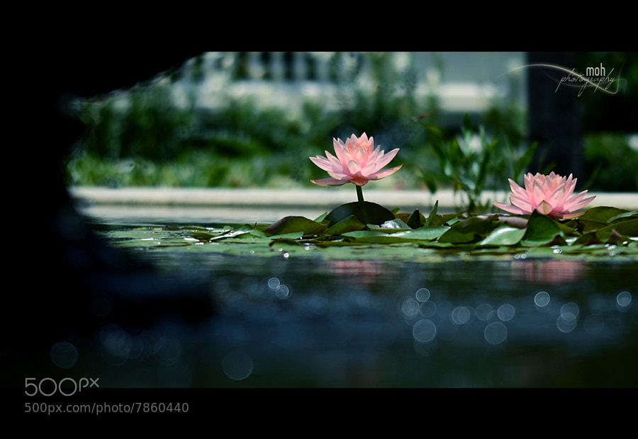 Photograph Padma by Mohan Duwal on 500px