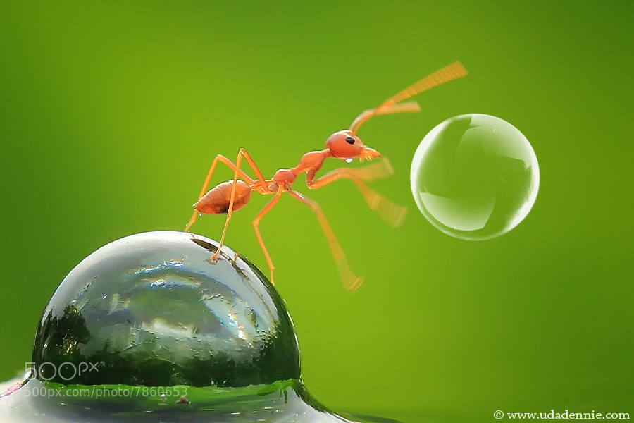Photograph playing balloon by Uda Dennie on 500px