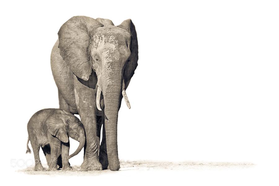 Photograph Okavango Motherhood by Mario Moreno on 500px