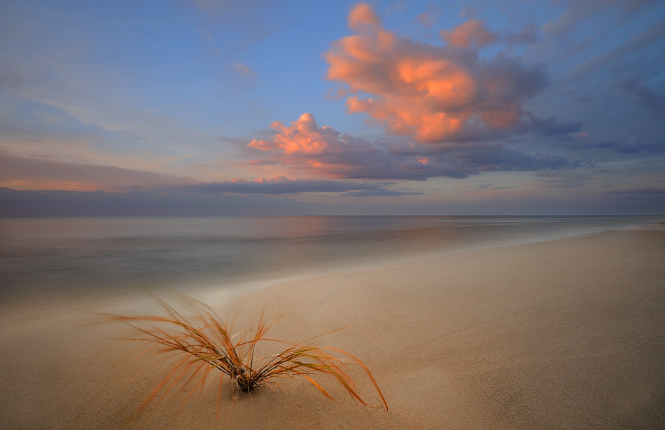 Photograph The Grass by paralaxa * on 500px