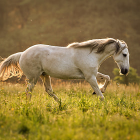 open range by Mathias Ahrens (Nachtfrost)) on 500px.com
