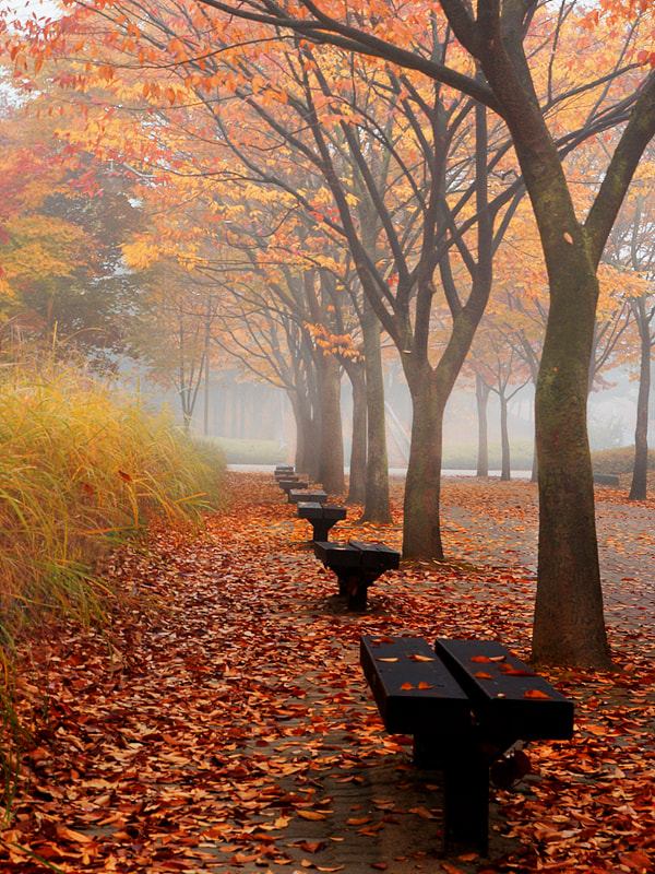 Photograph Autumn Morning by Woon Shin on 500px