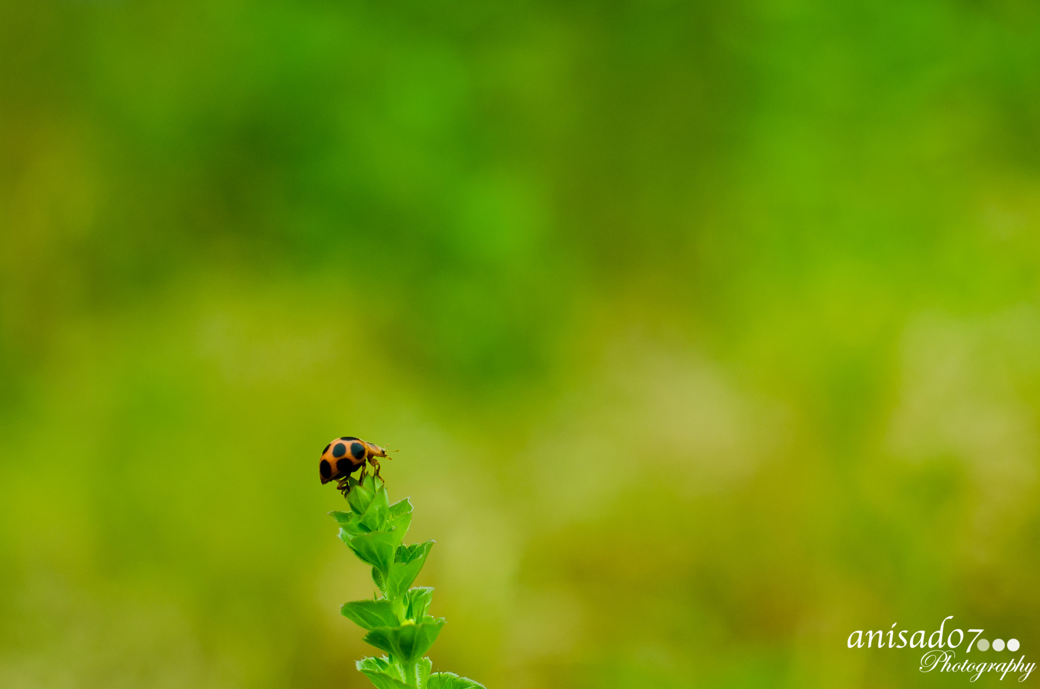 Photograph I am in the TOP by Anish Adhikari on 500px