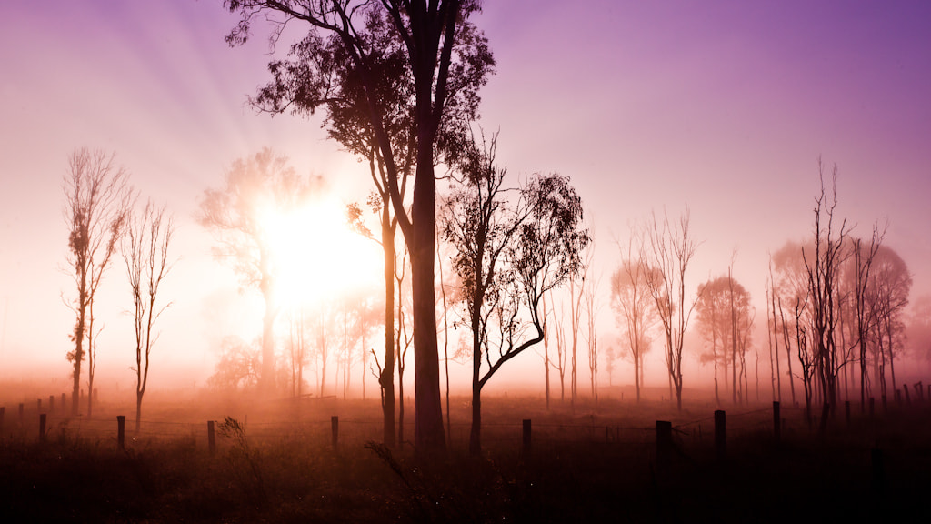 Photograph Australian Morning by Andrew Tallon on 500px
