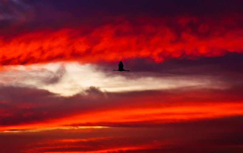 Photograph Fire by Guy Cohen on 500px