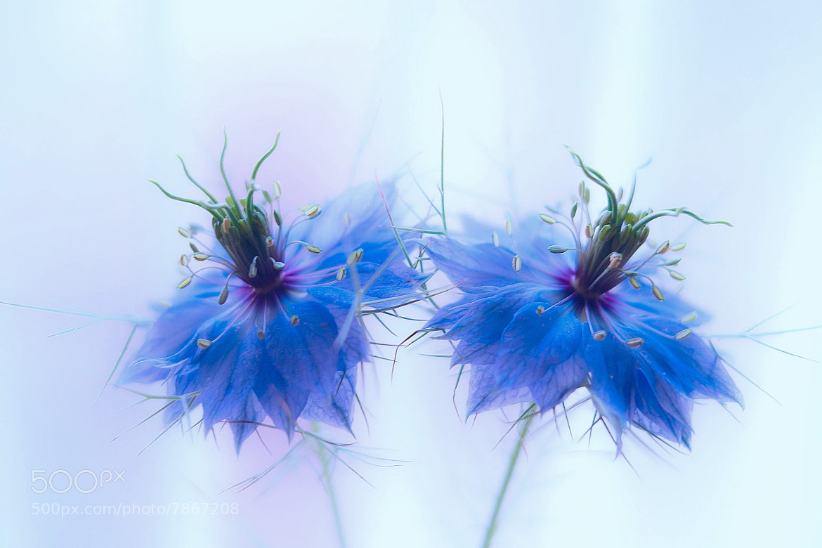 Photograph  Blue Lyricism by Lafugue Logos   on 500px