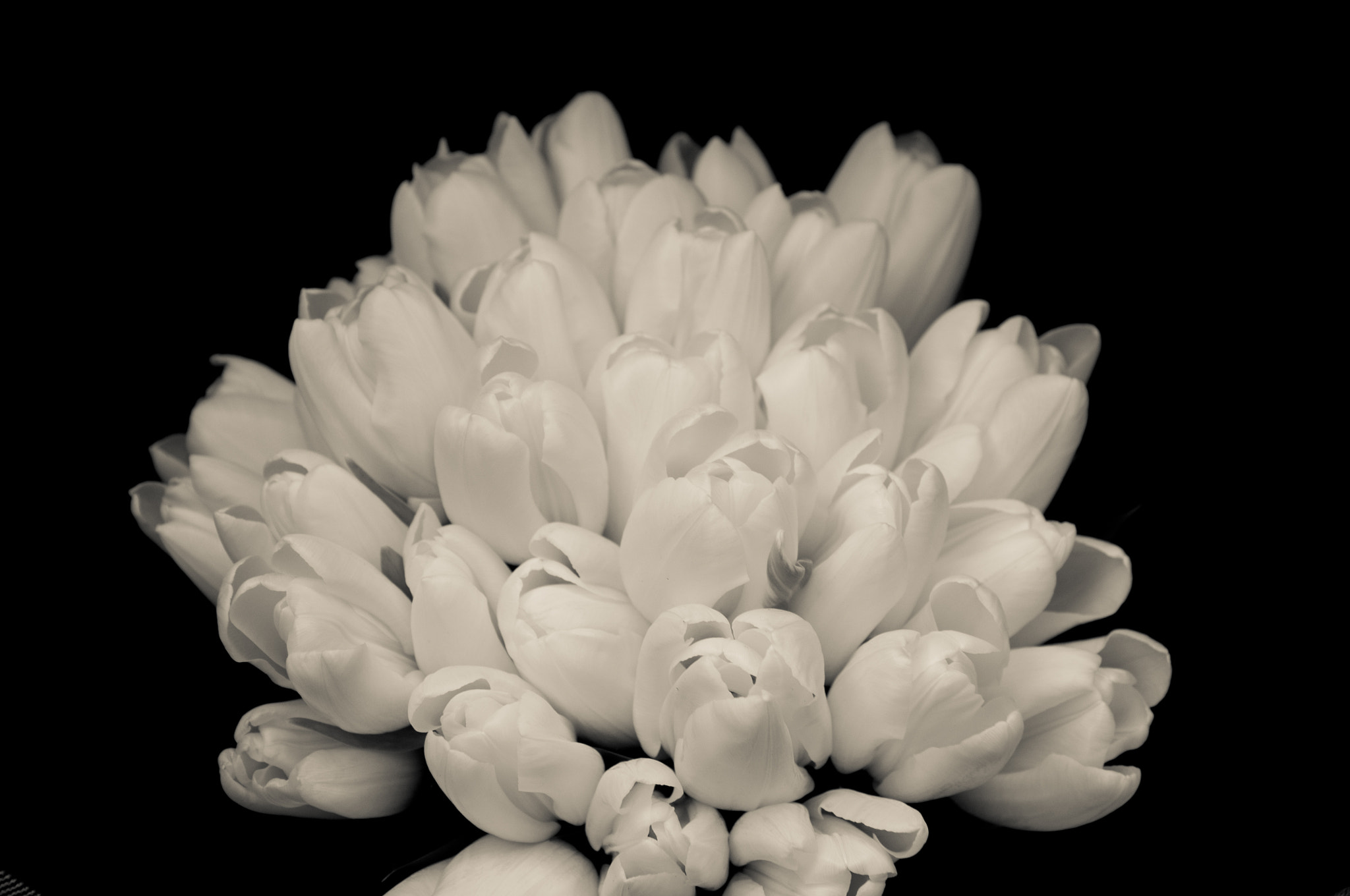 Photograph Wedding Tulips by Laura Harris on 500px