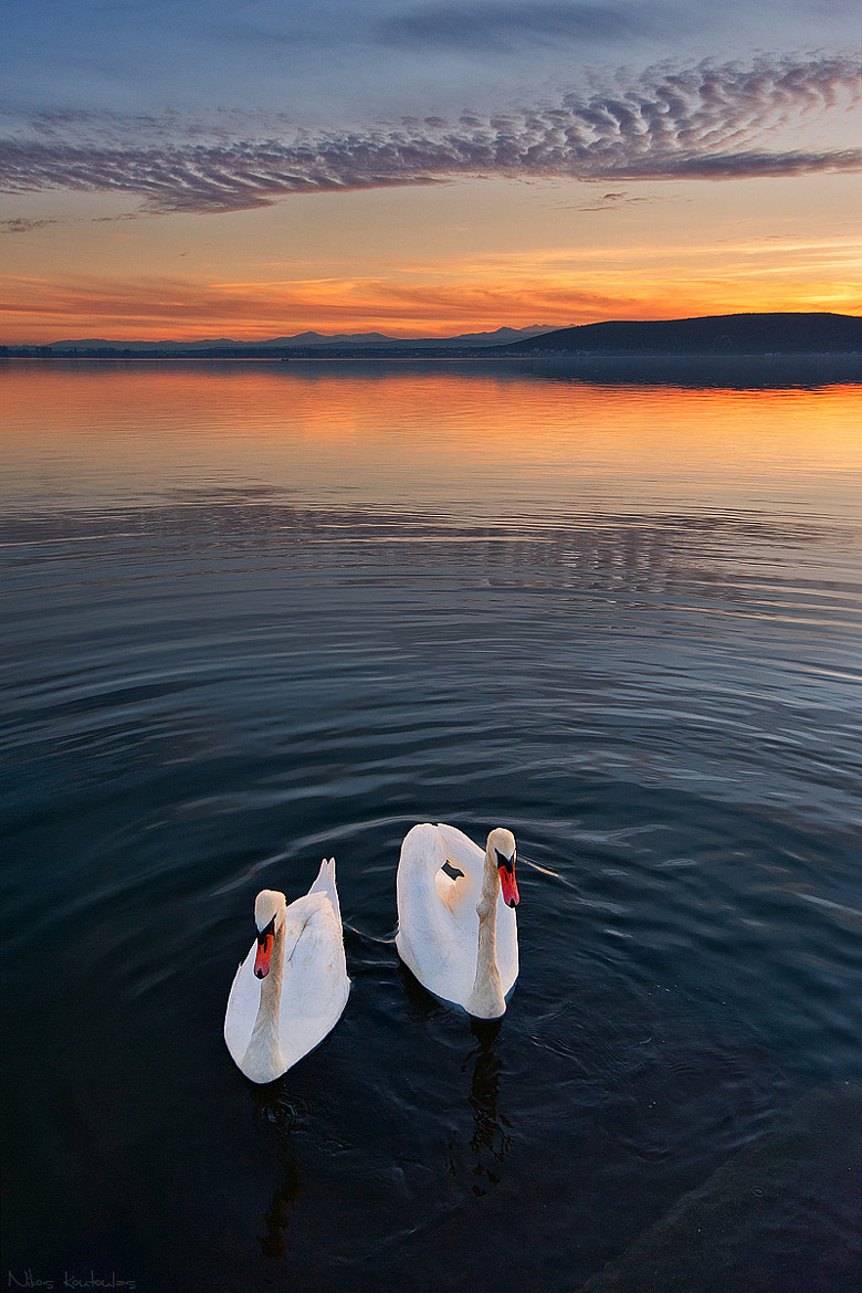 Photograph Swan lake by Nikos Koutoulas on 500px