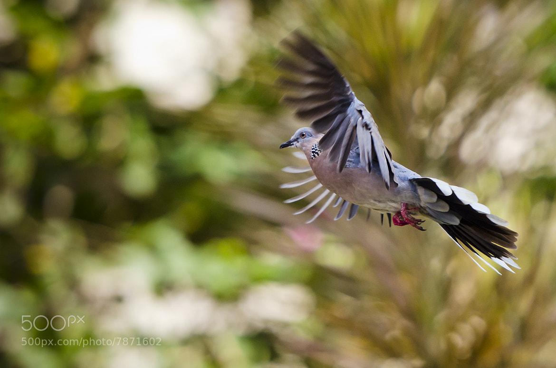 Photograph Freedom by Amar Rai on 500px