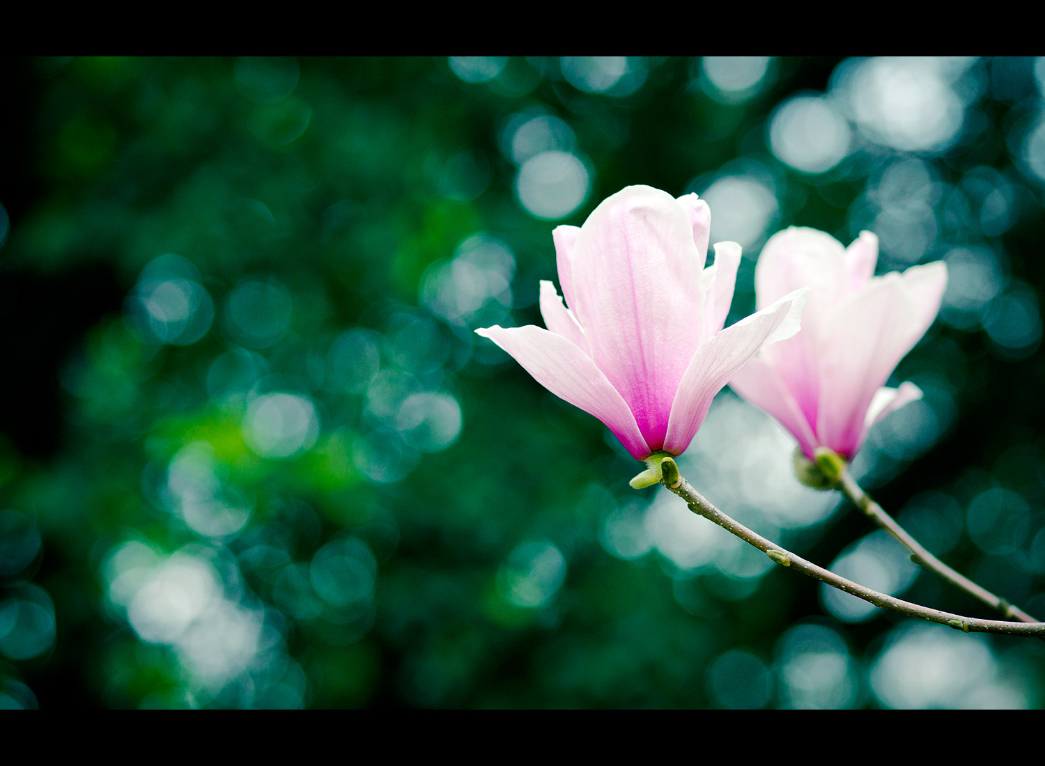 Photograph Untitled by LEE JUN on 500px