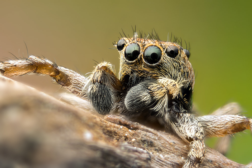 Photograph Little Jumper by Markus Reugels on 500px