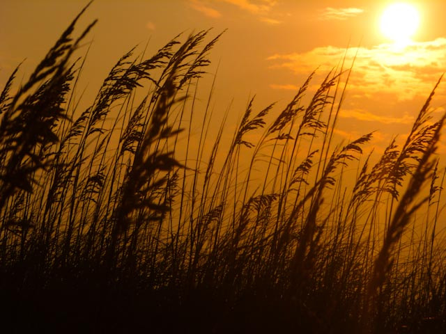 Photograph Ocracoke Sunset by Todd Taylor on 500px