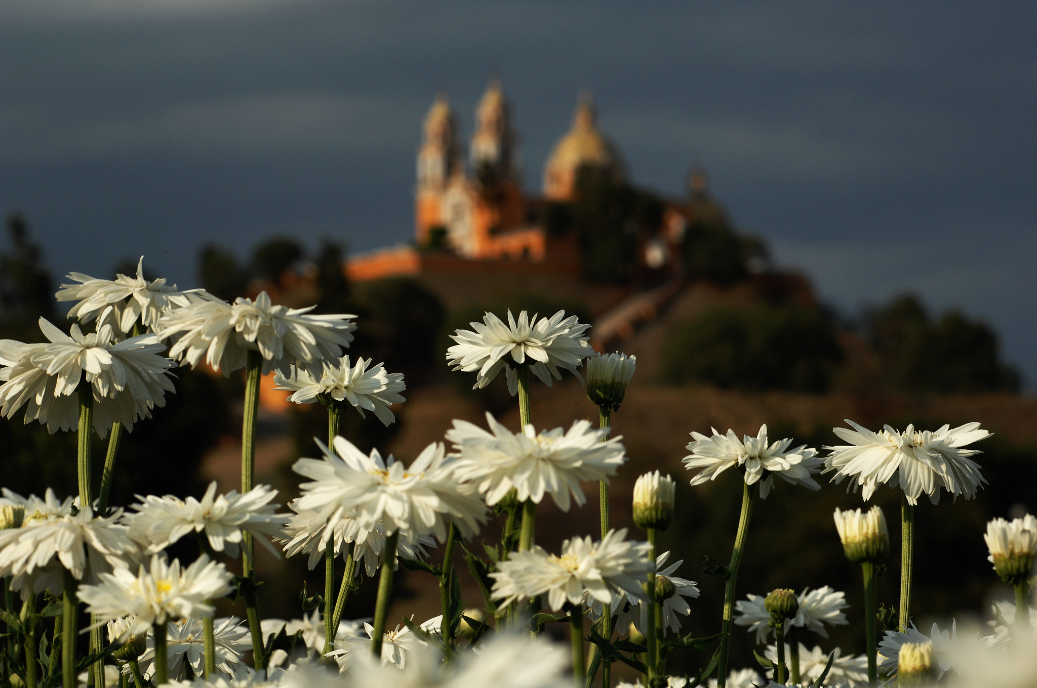 Photograph Daisies and church by Cristobal Garciaferro Rubio on 500px
