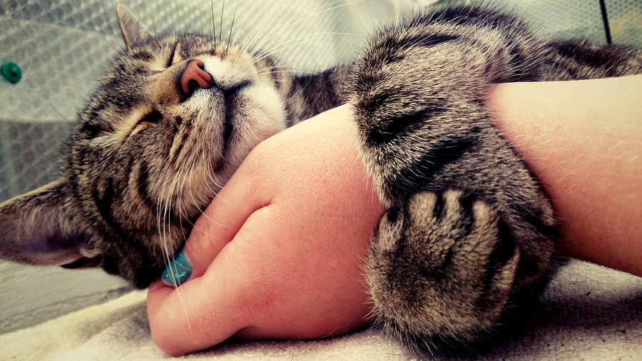 Photograph Cat cuddles by Abbie Clements on 500px