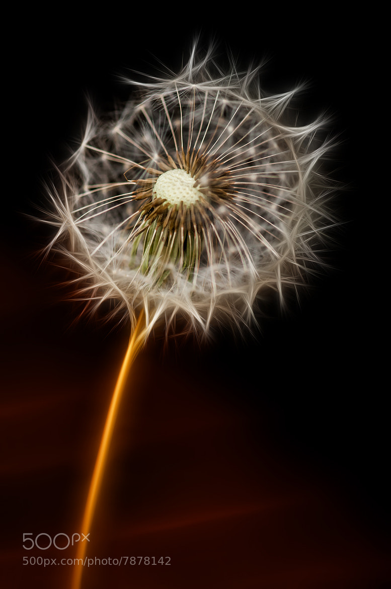 Photograph Firework or what? by Ton van de Laar on 500px