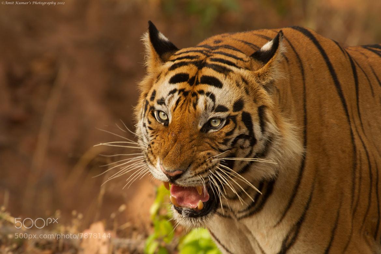 Photograph Blue-Eyed Beast by Amit Kumar on 500px