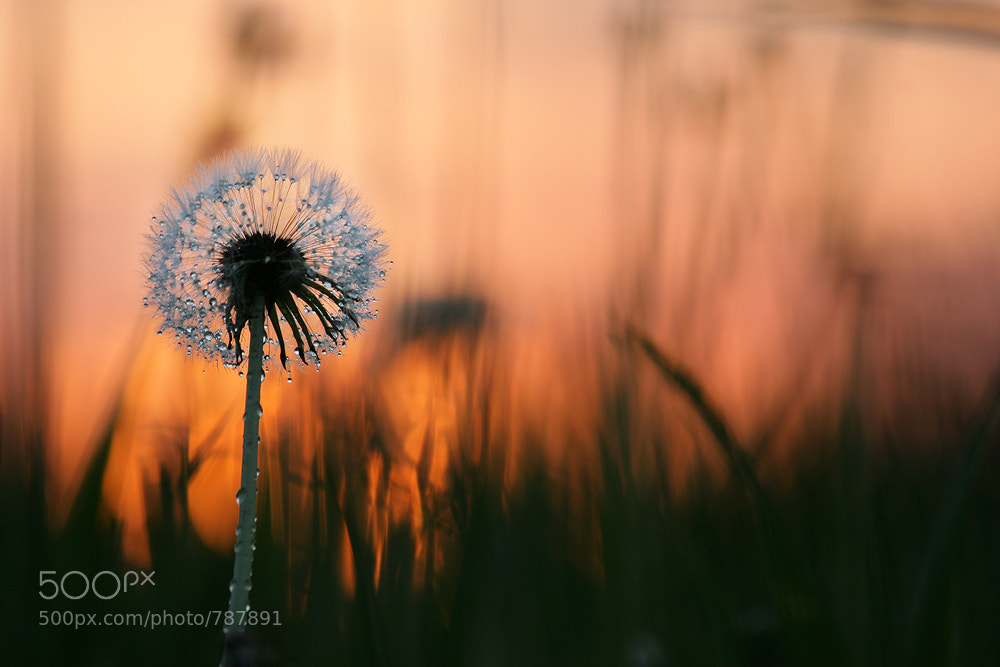 Photograph Last Sunrise by Vadim Trunov on 500px