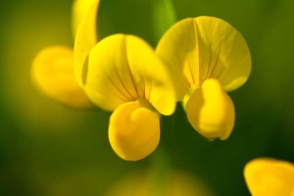 Photograph Yellow by Roman Seeleitner on 500px