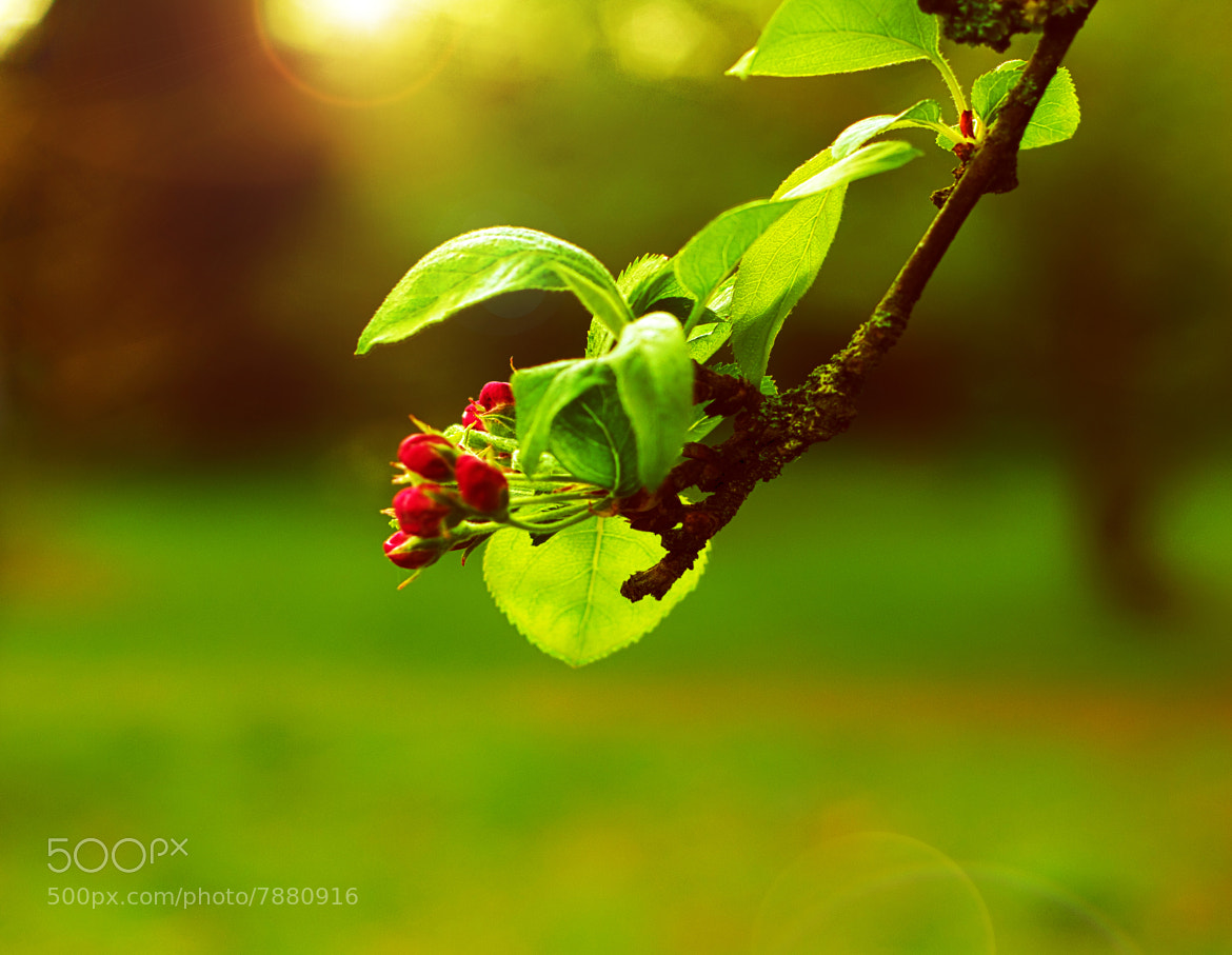 Photograph buds by dkp foto on 500px