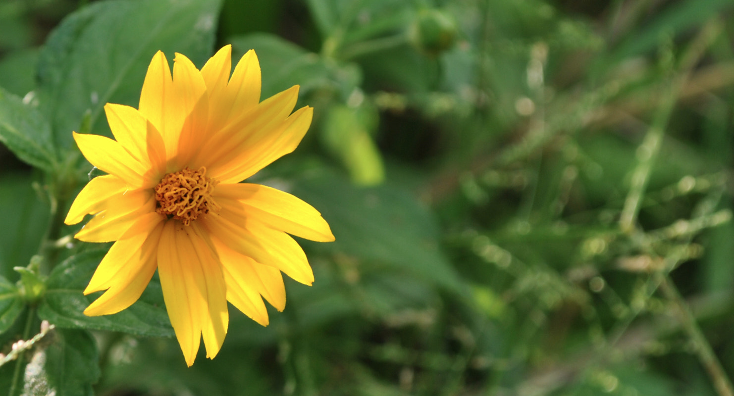 Photograph Yellow by Carlos Solano on 500px