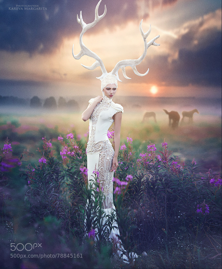 Photograph White deer by Margarita Kareva on 500px