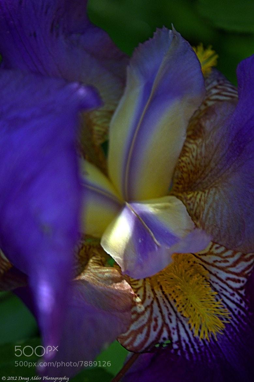 Photograph Iris by Doug Alder on 500px