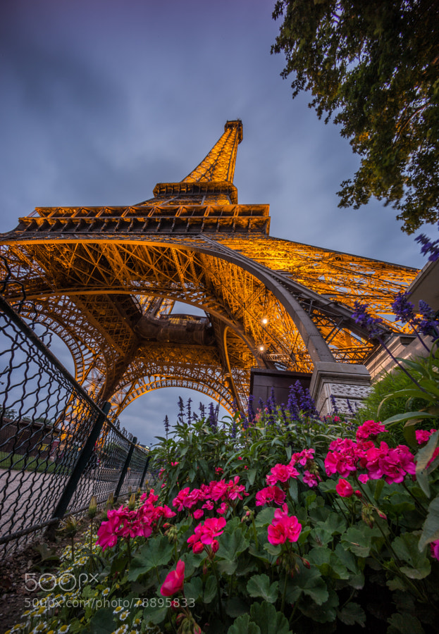 Photograph Eiffel in the Summer by Tristan O'Tierney on 500px