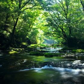 Brilliant Green Forest by Junya Hasegawa (JIN-X3)) on 500px.com