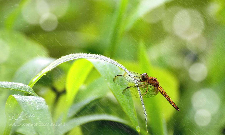 Photograph Rain by Nuang Sangkhsri on 500px
