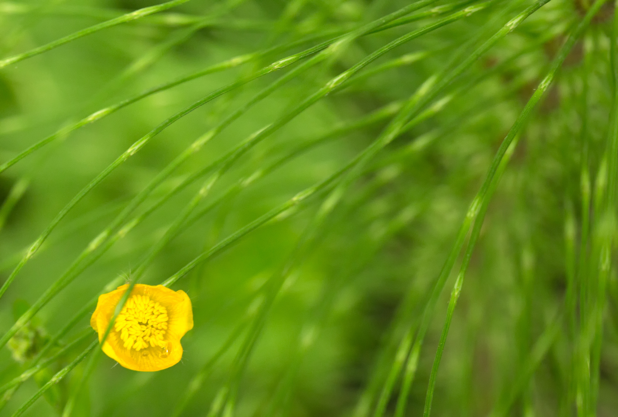 Photograph Yellow and Green by Joseph Calev on 500px