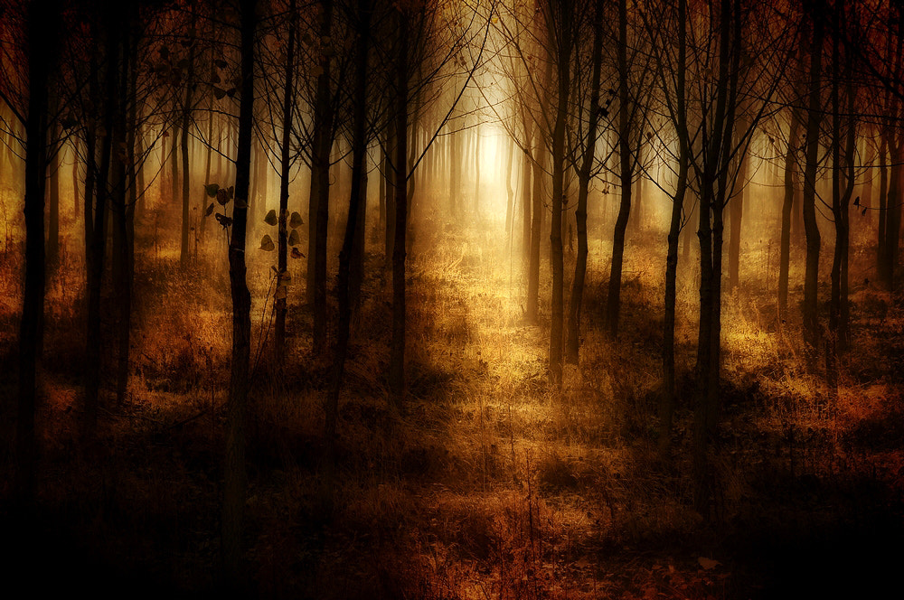 Photograph forest lights by Andy 58 on 500px