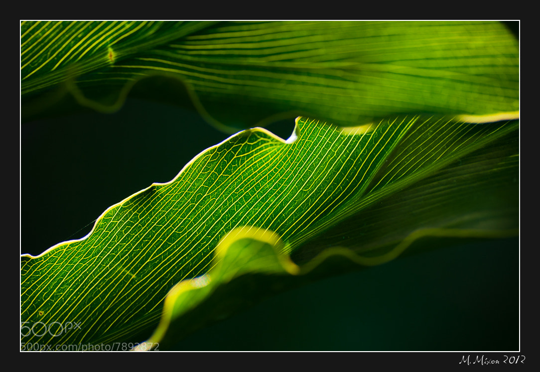 Photograph Leaf in the Sun by Michael Mixon on 500px