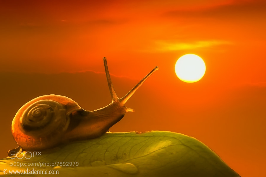 Photograph enjoying the sunset by Uda Dennie on 500px