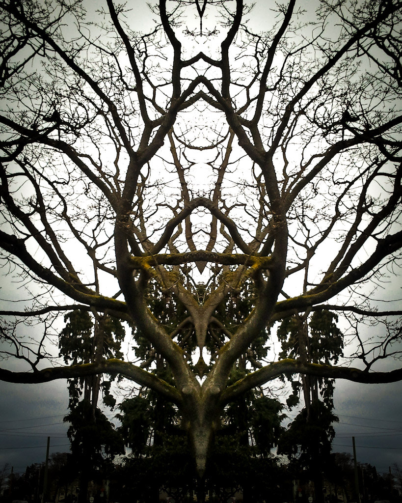 Photograph Many Branches by Marcia and Mike Nelson Pedde on 500px
