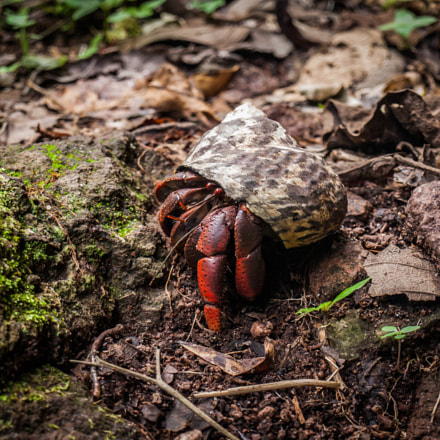 Small Rainforest Animal